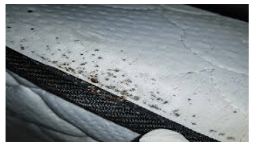 Anti Bedbug & Allergy Treatment Melbourne