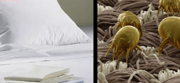 Mattress Bed Bug Treatment Brisbane Southside