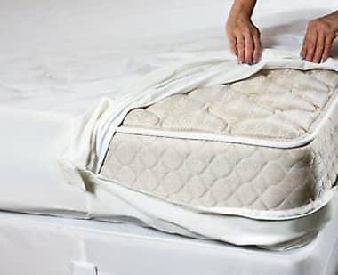 Anti Bedbug & Allergy Treatment