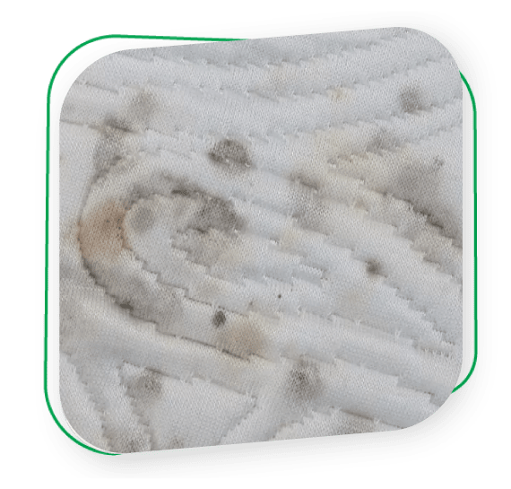 Mattress Mould Treatment Melbourne